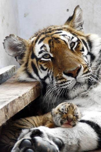 beauty animal parenting pictures creative nature life