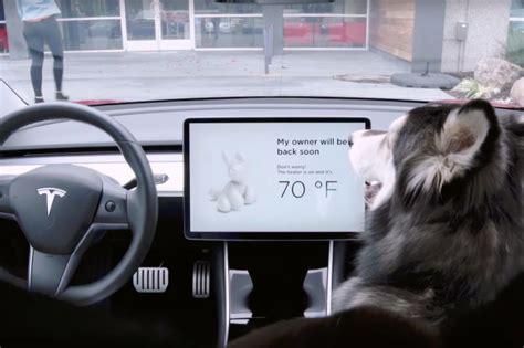 tesla cars   dog  sentry modes zigwheels