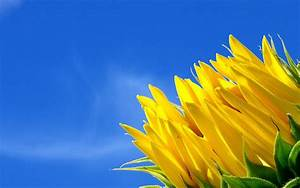 Blue And Yellow Flower Wallpaper 13 Desktop Background ...