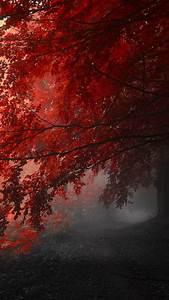 4288x2848px Nature 4K Wallpaper - WallpaperSafari
