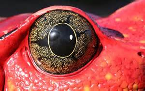 Most Beautiful Animal Eyes