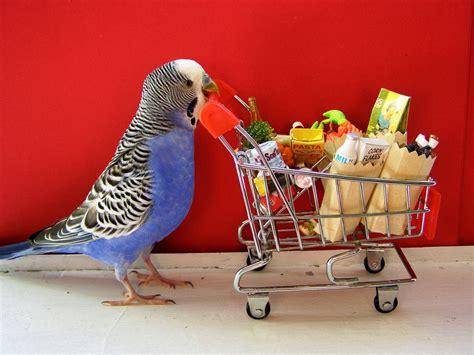 household toxins for birds albert north vet clinic