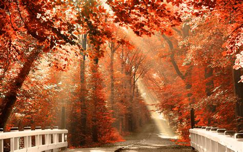 Autumn Fall Desktop Backgrounds by Fall Leaves Wallpaper For Desktop 60 Images