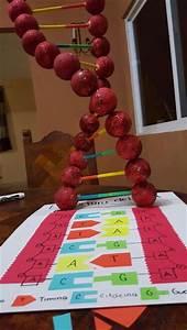 Estructura del ADN. | Escuela (ideas). | Pinterest