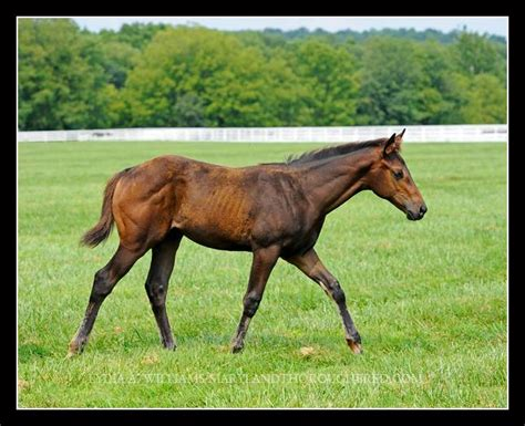 farms yearling marathon maryland keeneland colt horse sells bay association law