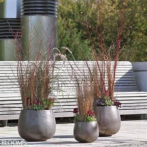 Winterpflanzen Für Balkonkästen : balkon und gartenideen stilvolle herbstpflanzungen als dreierensemble garten pinterest ~ Indierocktalk.com Haus und Dekorationen
