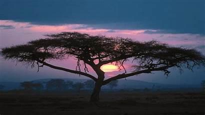 Africa Iphone African Desktop Nature Tree Wallpapers