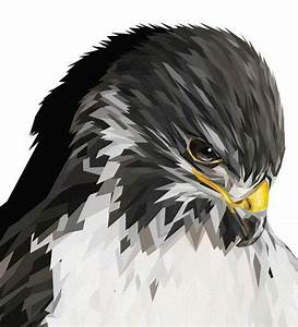 falcon 20 Amazing Geometric Illustration Designs ...