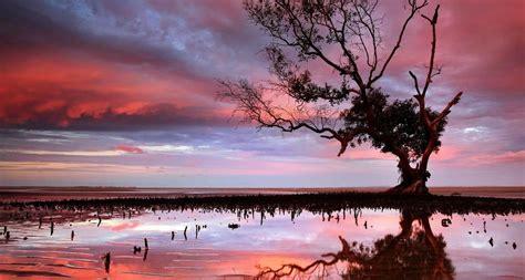Sunset Over Tidal Area In Brisbane Mangrove Tree Peapix