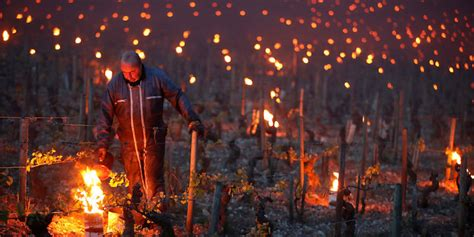 candele francesi in francia hanno acceso candele e fal 242 nei vigneti per