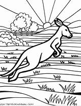 Kangaroo Coloring Pages sketch template