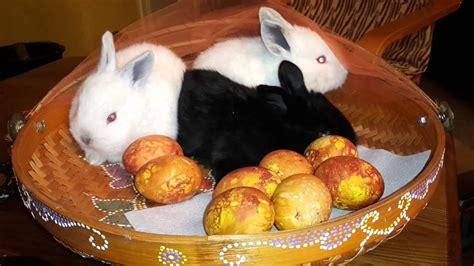 Priecīgas Lieldienas! - YouTube