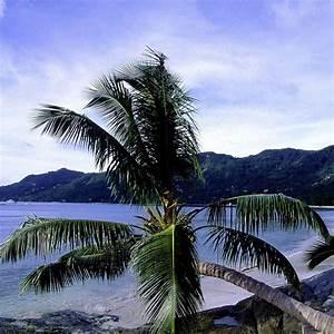 Forum Croisiere Ocean Indien : voyage seychelles s jour aux seychelles h tels et croisi res kuoni ~ Medecine-chirurgie-esthetiques.com Avis de Voitures