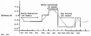 Pregnancy Period Of A Sheep