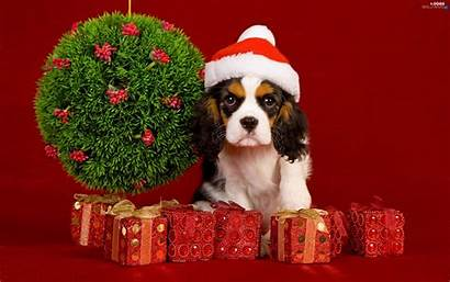 Christmas Dog Decor Bonnet Dogs Wallpapers Published