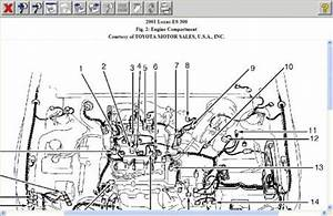 2001 Lexus Es300 Engine Diagram. 1999 lexus es300 engine diagram automotive  parts diagram. i need the timing diagram and head bolt torque specs for a.  2001 lexus es 300 how to find2002-acura-tl-radio.info