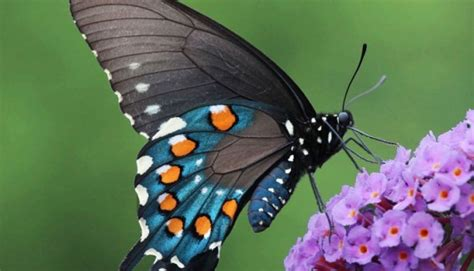 mariposas coloridas imagenes  compartir por