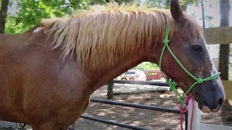 ride riding horse gentle beginner easy safe