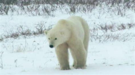 Maine Man Returns Home 3 Weeks After Polar Bear Attack