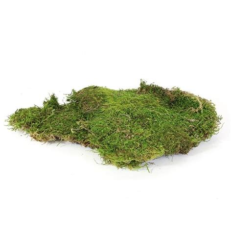 sheet moss from easternleaf com sheet moss can be used to