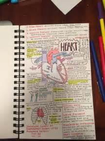 note taking strategy for anatomy class nursing school