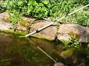 Fadenalgen Im Gartenteich : fadenalgen im gartenteich enfernen mit der algenhexe ~ A.2002-acura-tl-radio.info Haus und Dekorationen