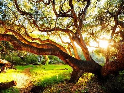 Tree Nice