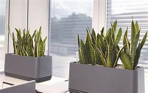 Pflanzen Für Gute Raumluft : airy biofilter akzente raumbegr nung ~ A.2002-acura-tl-radio.info Haus und Dekorationen