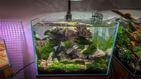 Aquascape Moss by Moss Aquascape