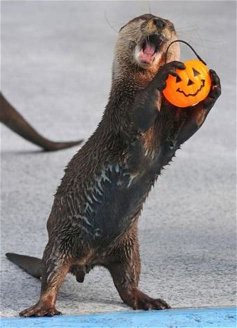 halloween otter halloween myniceprofilecom