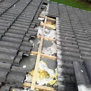 Marder Unter Dem Dach : marder unter dem dach haben sie wirklich einen marder auf dem dachboden marderabwehr den ~ Frokenaadalensverden.com Haus und Dekorationen