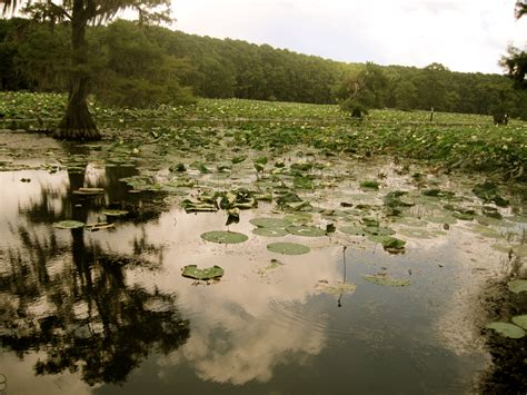 Caddo Lake Boat Rental by Photographing Uncertainty And Beyond At Caddo Lake In