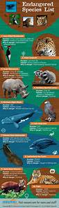 105 best Endangered, please save us! images on Pinterest ...