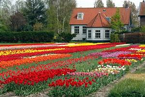 Garden Flower With House