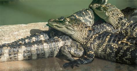 Everglades Airboat Tours Near Sarasota by Wooten S Everglades Airboat Tours Must Do Visitor Guides