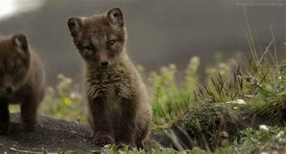 Funny Gifs Animal Fox Amazing