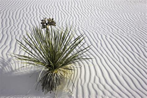 luscious landscapes artist statement larry brenden