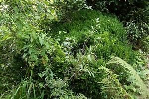 Buchsbaum Weißer Befall : die ersten sch tze im garten majas pflanzenblog ~ Frokenaadalensverden.com Haus und Dekorationen