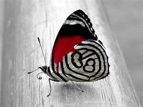 borboletas imagens  fotos  facebook pinterest