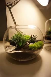 Terrarium Plante Deco : r alisez un terrarium d co en quelques minutes le coin ~ Dode.kayakingforconservation.com Idées de Décoration