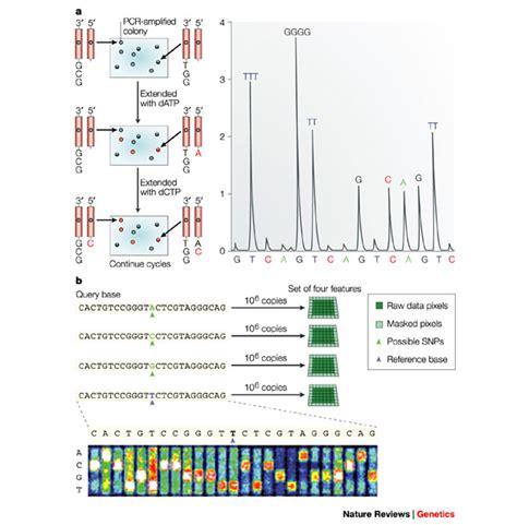 sequenziamento illumina exles of cyclic array sequencing and sequencing by