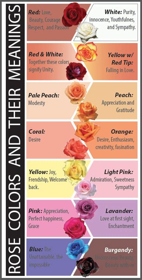 carnation color meanings colors and their meanings the board of random