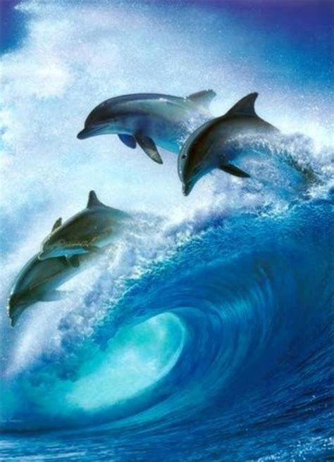 swimming   waves life   ocean pinterest dolphins swimming   wave