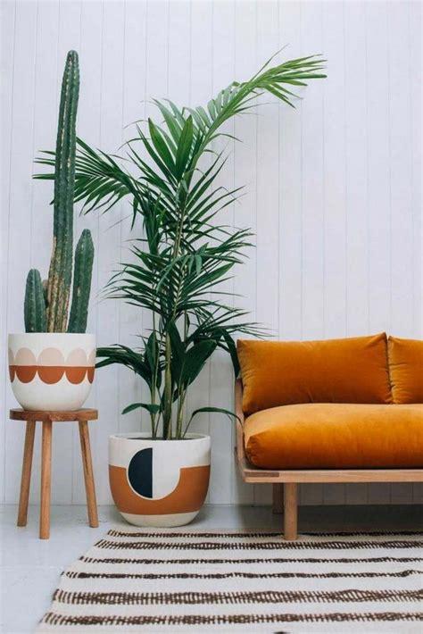 entretenir un azalee d interieur plantes vertes int 233 rieur faciles 224 entretenir