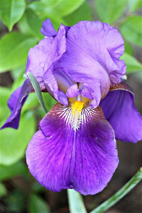 state flowers  usa  birds images  pinterest