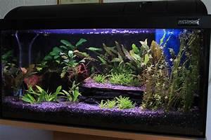 Aquarium Kies Kaufen : aquarium kies schwarz zuhause image idee ~ Orissabook.com Haus und Dekorationen