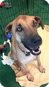 Deuce | Adopted Dog | Phoenix, AZ | German Shepherd Dog ...