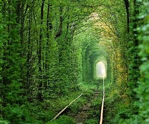 World's most magical places | Beautiful, Tunnel of love ...