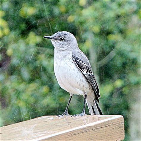 inspirational and christian stories mocking bird