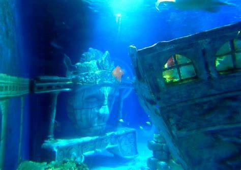 bureau vall馥 mulhouse val d europe aquarium 28 images themeparkmedia co uk sealife val d europe guide poisson vache picture of aquarium sea val d europe marne la